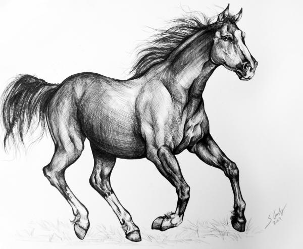 Wild Mustang Horse Drawing