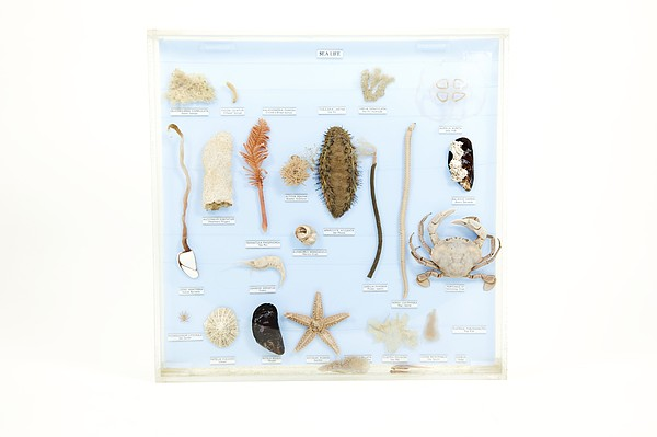 Marine Life Specimens Print by Gregory Davies, Medinet Photographics
