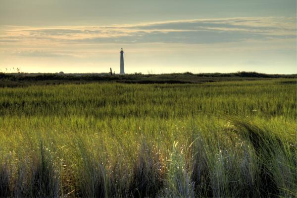 Marsh Grass and Morris Island Lighthouse Photograph
