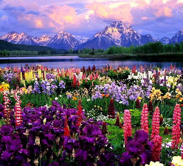 Online Contest - Alpine Flower Meadows