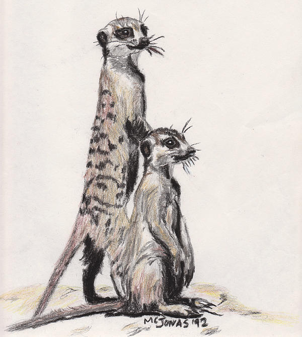Meerkats Print by Marqueta Graham
