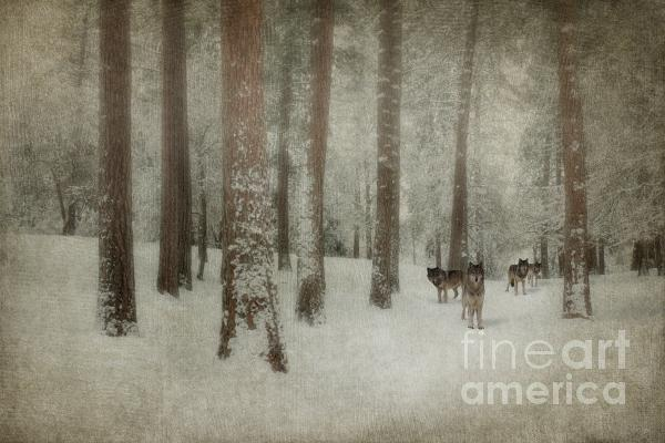 Memories Of The Trees Print by Reflective Moments  Photography and Digital Art Images