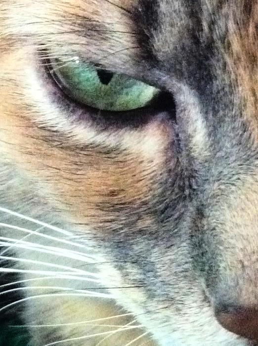 Tia Anderson-Esguerra - Meow Meow