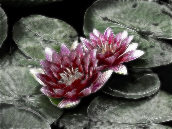Joachim G Pinkawa - Metal Lilies