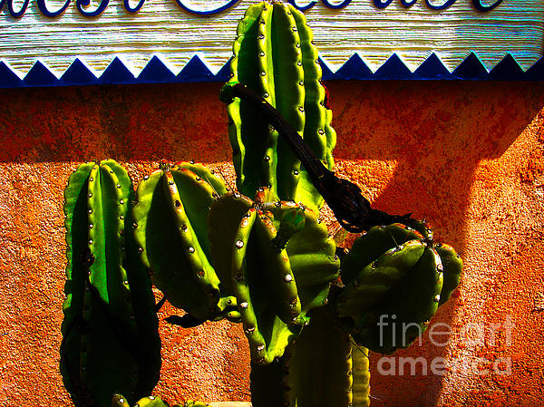 Mexican Style  Print by Susanne Van Hulst