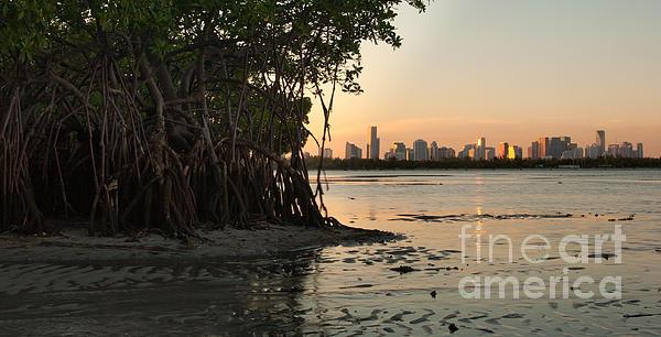 Miami With Mangroves Print by Matt Tilghman