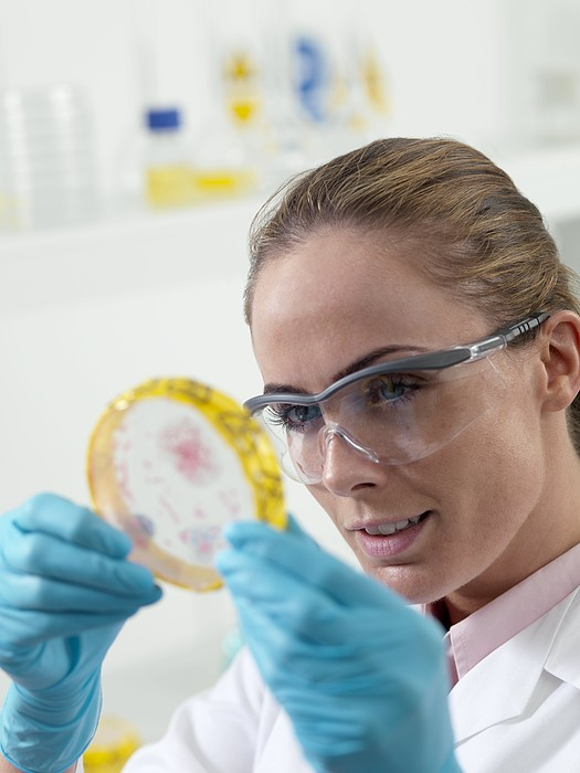 Microbiological Research Print by Tek Image