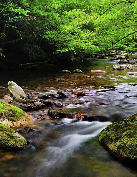 Middle Prong Little River Spring Print by Thomas Schoeller
