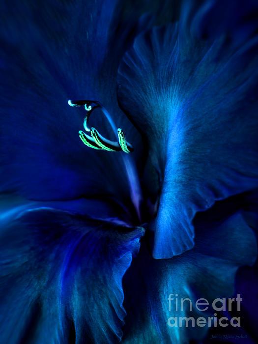 Midnight Blue Gladiola Flower Print by Jennie Marie Schell