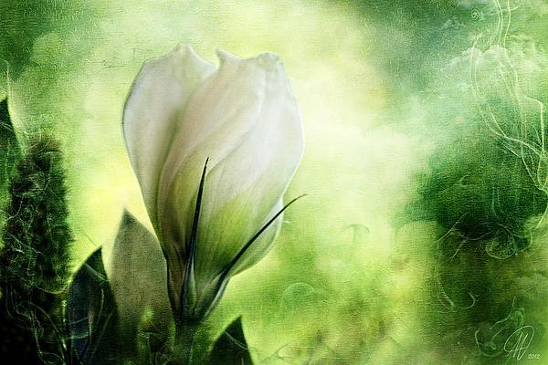 Midnight In The Garden Print by Margaret Hormann Bfa