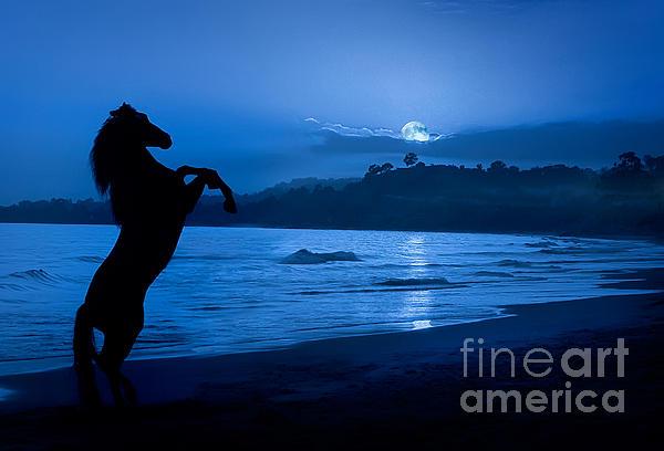 Patty Hallman - Midnight Stallion