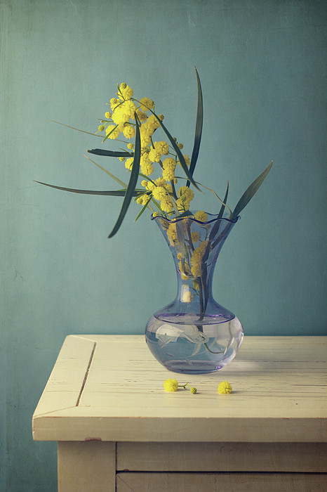 Mimosa Flower In Blue Vase Print by Copyright Anna Nemoy(Xaomena)
