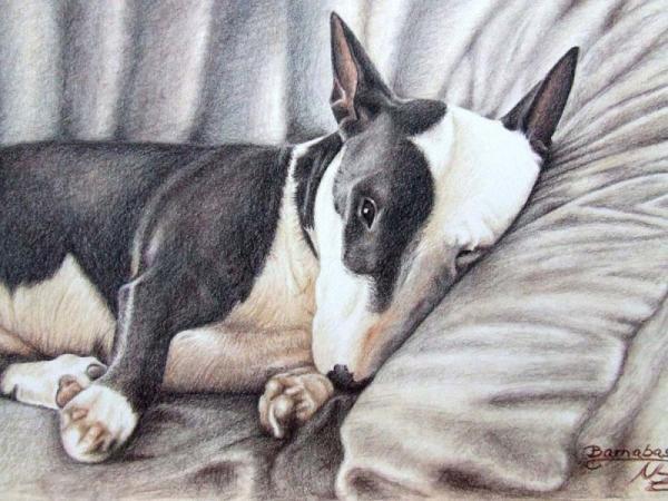 mini bulldog terrier by nicole zeug