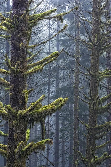 Misty Mystical Moss Forest Print by Paul W Sharpe Aka Wizard of Wonders