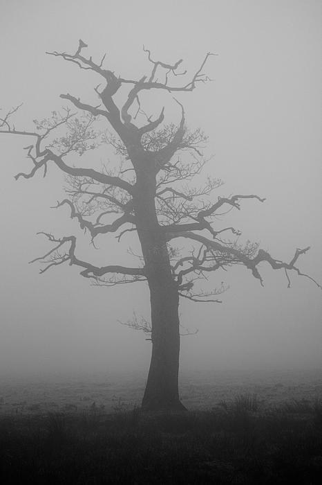 SteveH Photos - Misty Winter Tree
