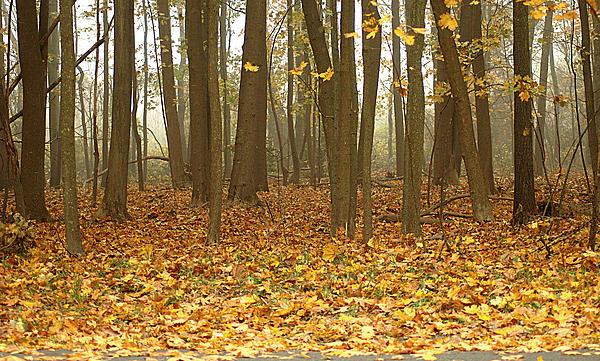Misty Wood Print by Cathy Kovarik