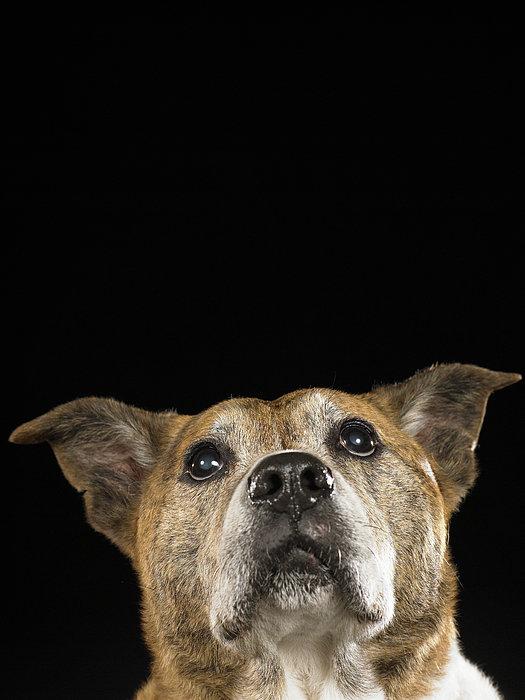 Mixed Breed Dog Looking Up Print by Ryan McVay