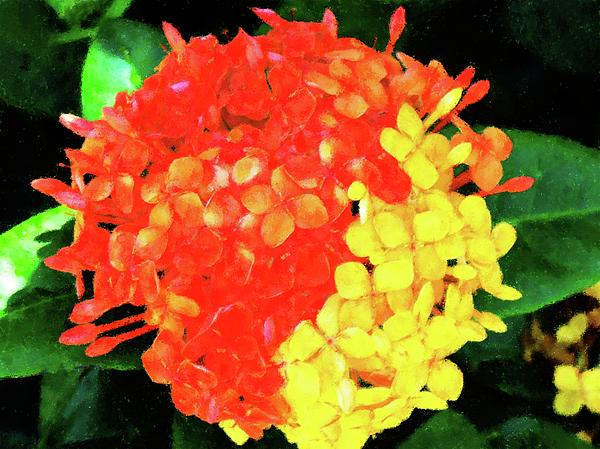 http://images.fineartamerica.com/images-medium/mixed-ixora-flower-florene-welebny.jpg