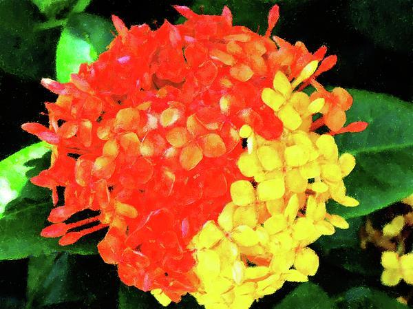 http://images.fineartamerica.com/images-medium/mixed-ixora-flower-florene-welebny.jpg