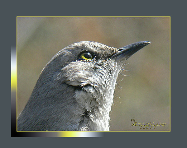 EricaMaxine  Price - Mockingbird Closeup
