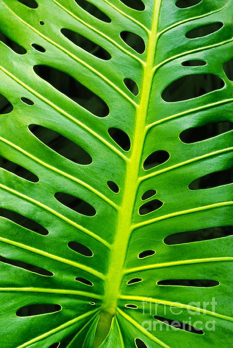 Monstera Leaf Print by Carlos Caetano