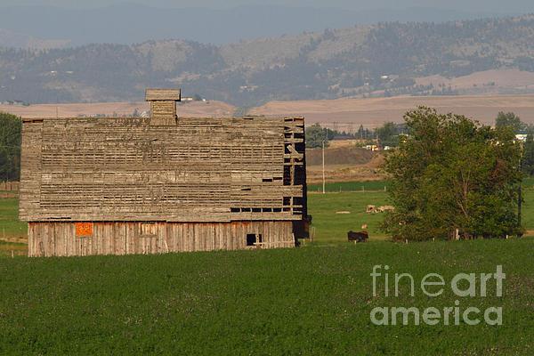 Richard Mann - Montana Barn 3