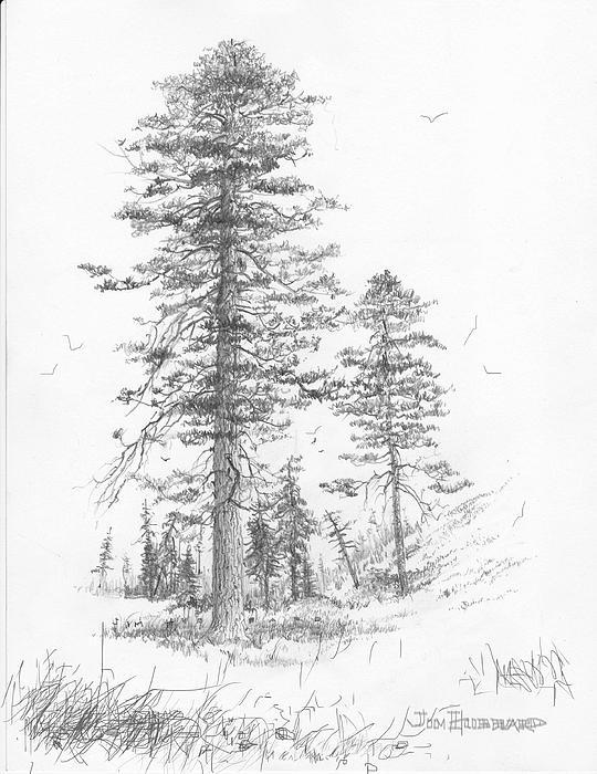 Montana-ponderosa Pine by Jim Hubbard