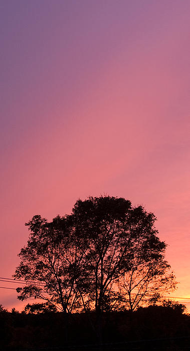 Mood In Pink And Purple Photograph