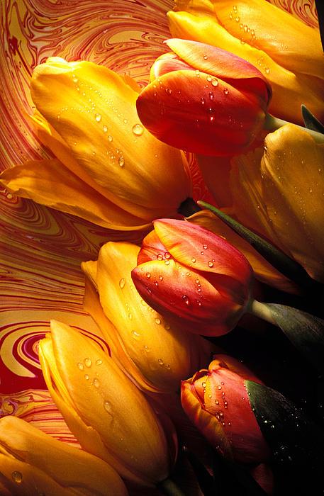 Moody Tulips Print by Garry Gay