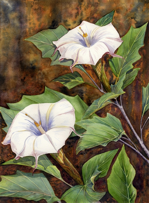 Moon Lilies Print by Catherine G McElroy