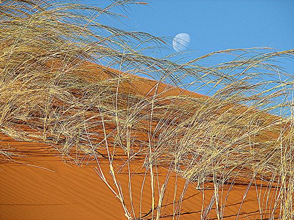 David Rich - Moon over Dune
