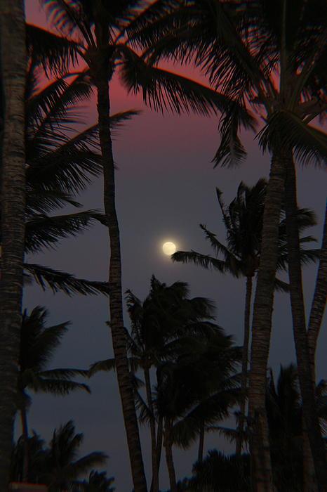 Raquel Amaral - Moon over Hawaii