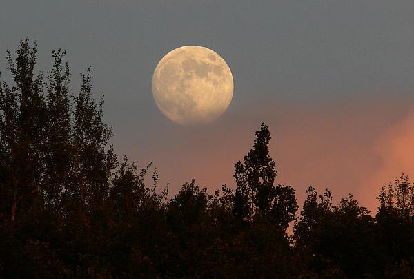 Natalie LaRocque - Moon Rise