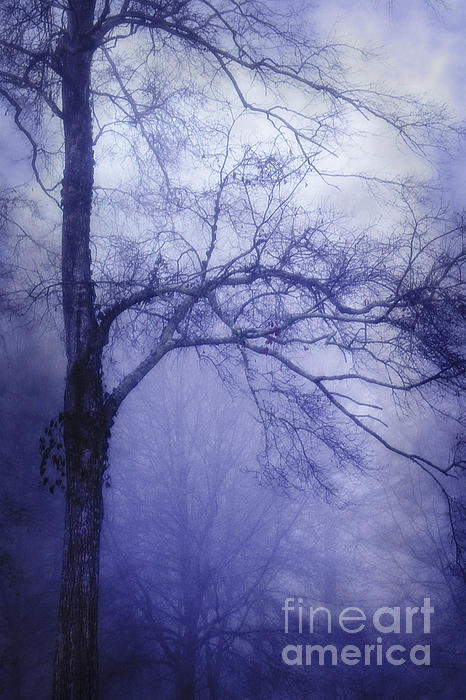 Judi Bagwell - Moonlit Tree