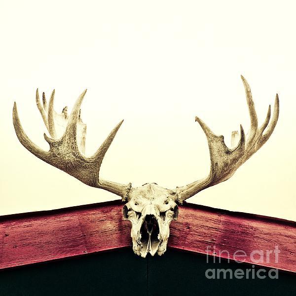 Moose Trophy Print by Priska Wettstein
