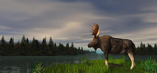 Walter Colvin - Moose
