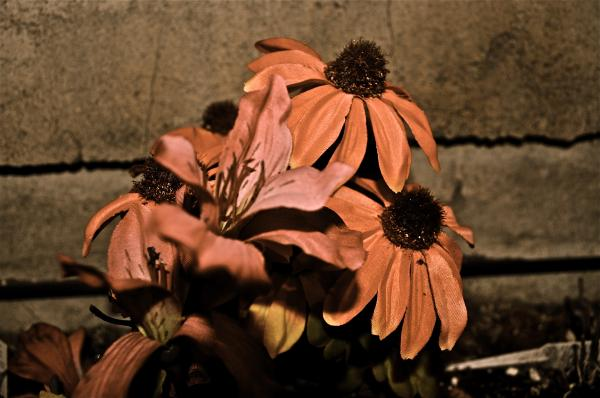 More Flower To Ya  Print by Brynn Ditsche