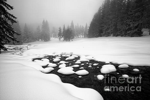 Morn In White Print by Evgeni Dinev
