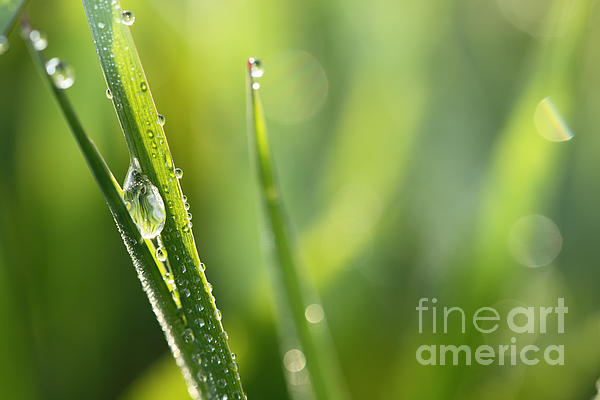 HJBH Photography - Morning dew