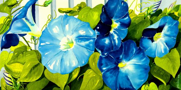 Morning Glories In Blue Print by Janis Grau