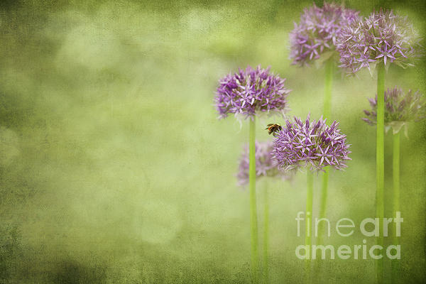 Morning In The Garden Print by Reflective Moments  Photography and Digital Art Images