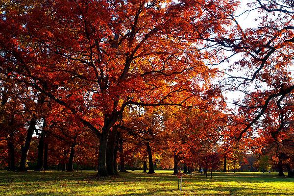 Morton Arboretum In Colorful Fall Print by Paul Ge