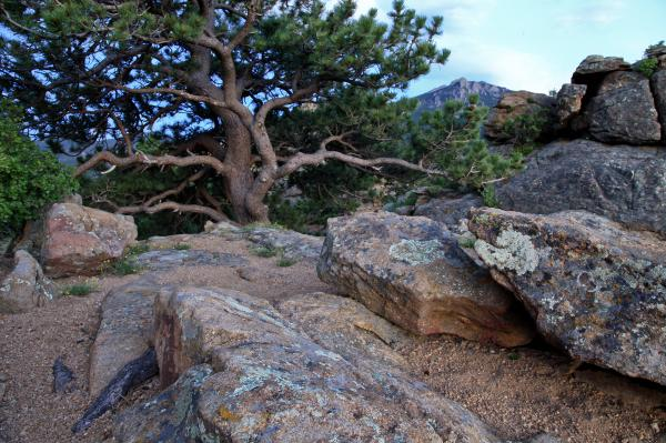 Moss Rocks And A Tree Photograph  - Moss Rocks And A Tree Fine Art Print