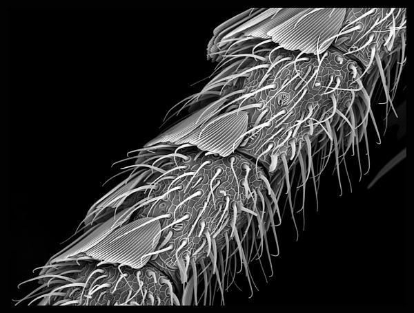 Moth Antennae  Print by Sheri  Neva