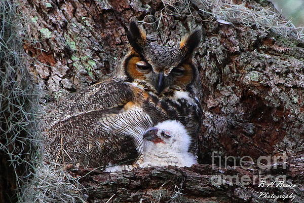 Mother And Baby Owl Print by Barbara Bowen