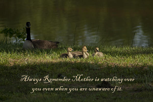 Mother's Watchful Eye Print by Kathy Clark