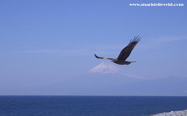 Mount Fuji With Eagle Pyrography  - Mount Fuji With Eagle Fine Art Print