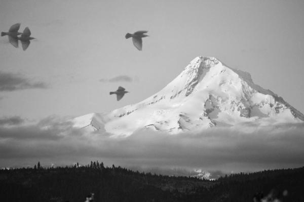 Andrea Hazel Ihlefeld - Mount Hood Crows
