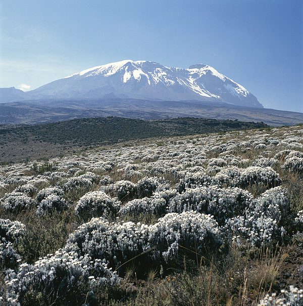 Mount Kilimanjaro, The Breach Wall Print by David Pluth