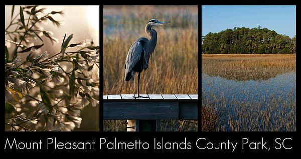 Mount Pleasant Palmetto Islands County Park  Print by Melissa Wyatt